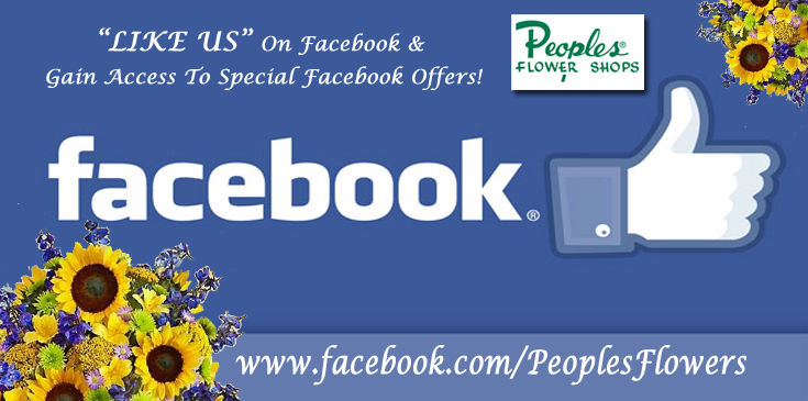 Like us on our Facebook page, Follow us on Twitter and Pinterest! Get special Facebook offers when you like our page.